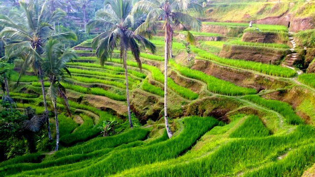 Bali Tourism - Things To Do In Ubud Bali