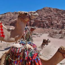 10 MUST Things to Know Before Jordan Travel